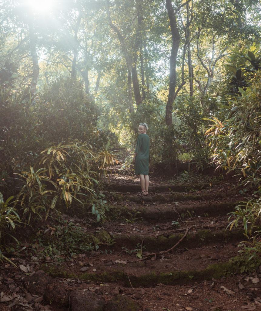 Zelený prales