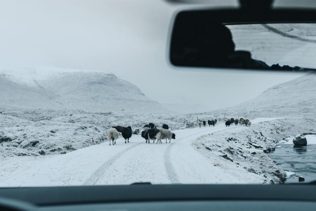 Faerské ostrovy - žije tu dvakrát viac oviec ako ľudí