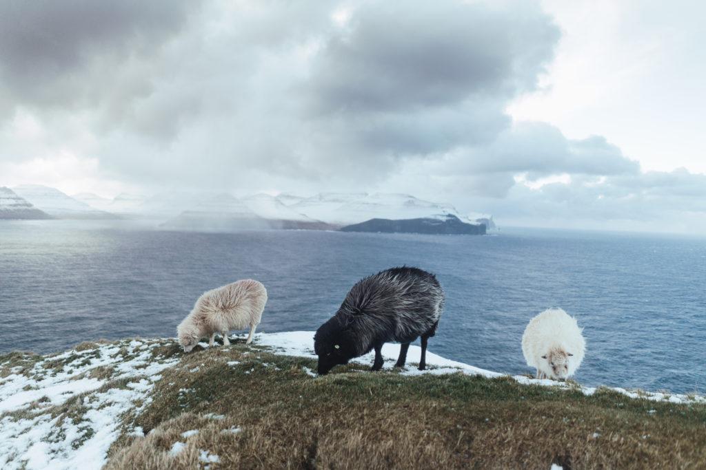 Faerské ostrovy - prezývané aj Ovčie ostrovy