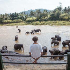 Sloní sirotinec v Pinnawale