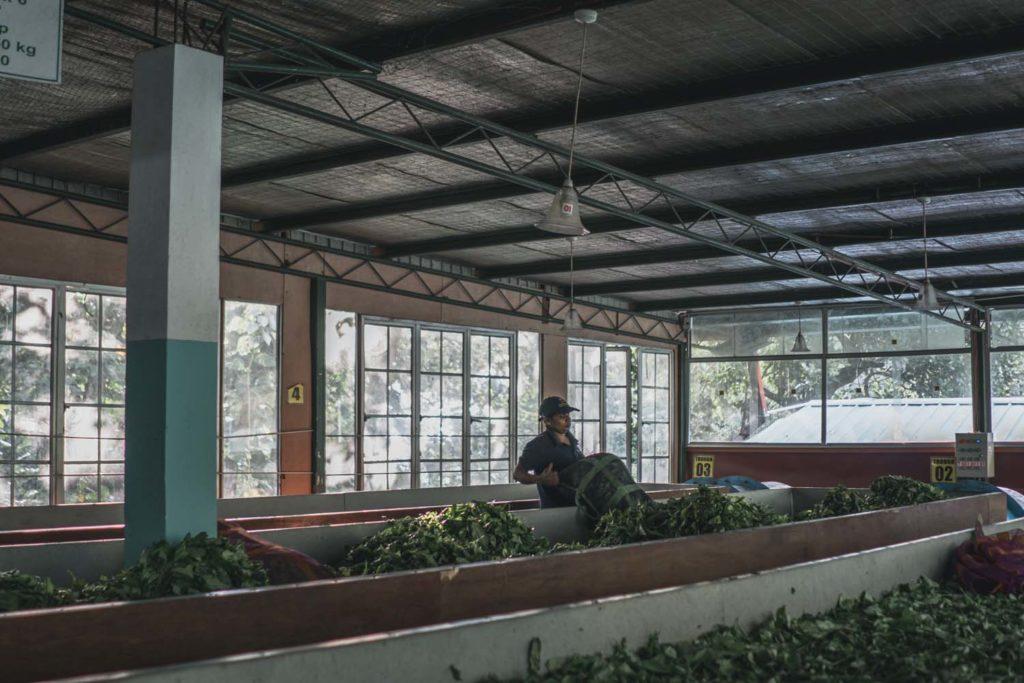 Rodinná fabrika na výrobu čaju