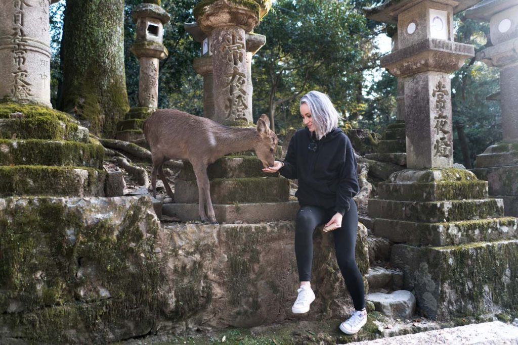 Srnčie mesto Nara