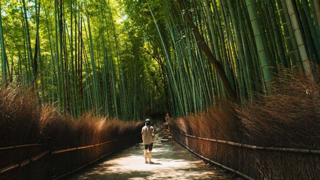 Bambusový les v Arashiyame