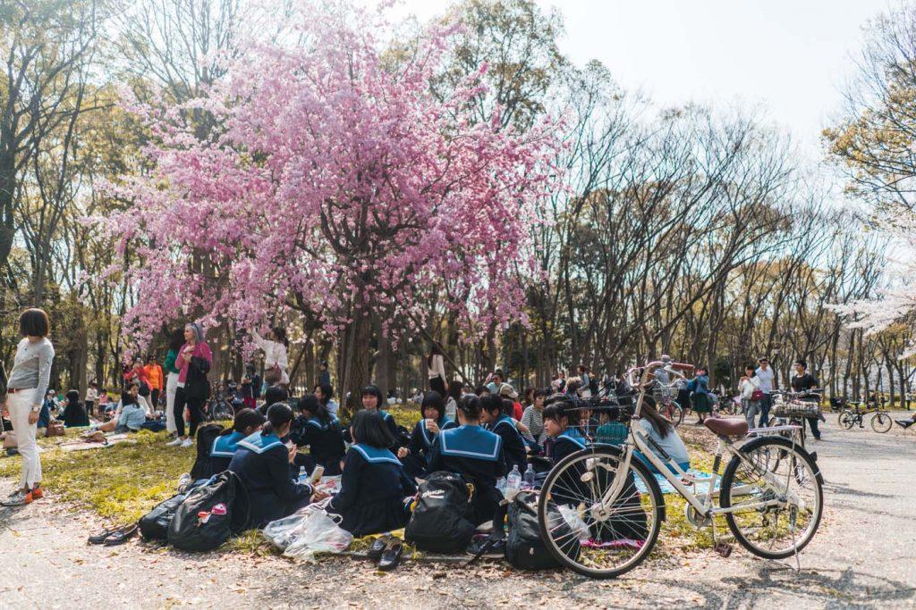 Sviatok Hanami - obdivovanie kvitnúcich čerešní