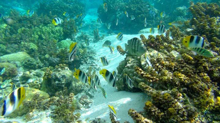 Koraly Taha´a