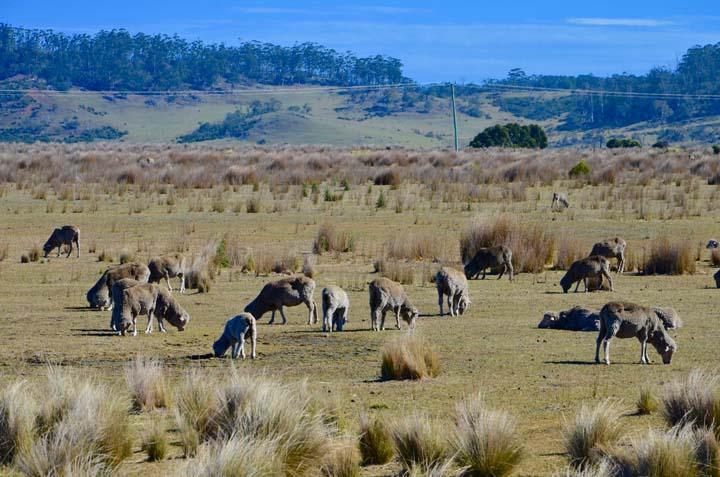 Príroda v Tasmánii