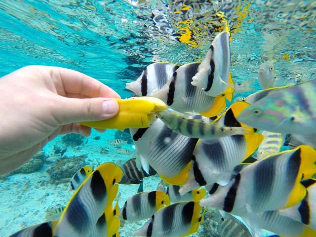 Podmorský raj Taha´a