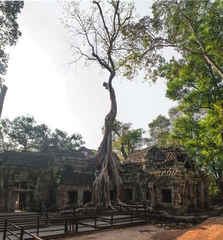 Chrám Ta Prohm v Angkor Wat