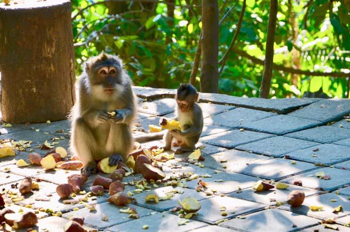 Monkey Forest na Bali.