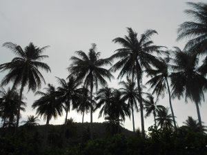 Karimunjawa: pohľad na prírodu
