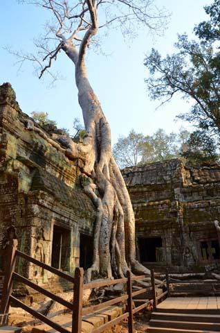 Ta Prohm je chrám poprerastaný koreňmi stromov, ktorý ste mohli vidieť vo filme Tomb Raider