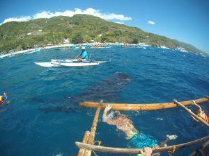 Ostrov Cebu a kúpanie sa so žralokom veľrybím