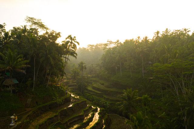 Bali - ryžové políčka Tegallalang