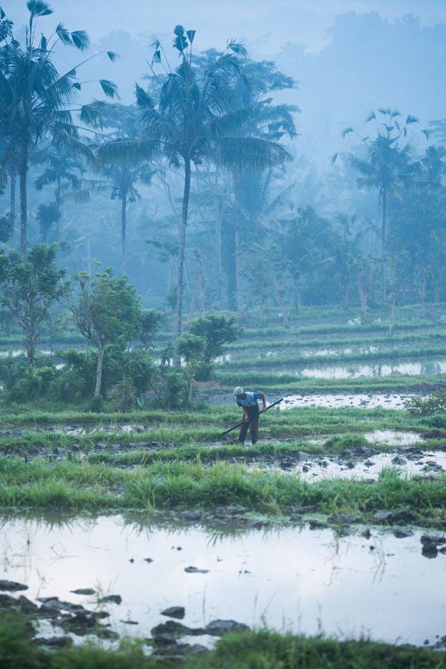 4lovek pracujúci na ryžových poliach