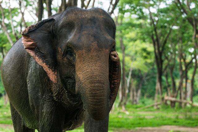 Thajsko a slonie sirotince