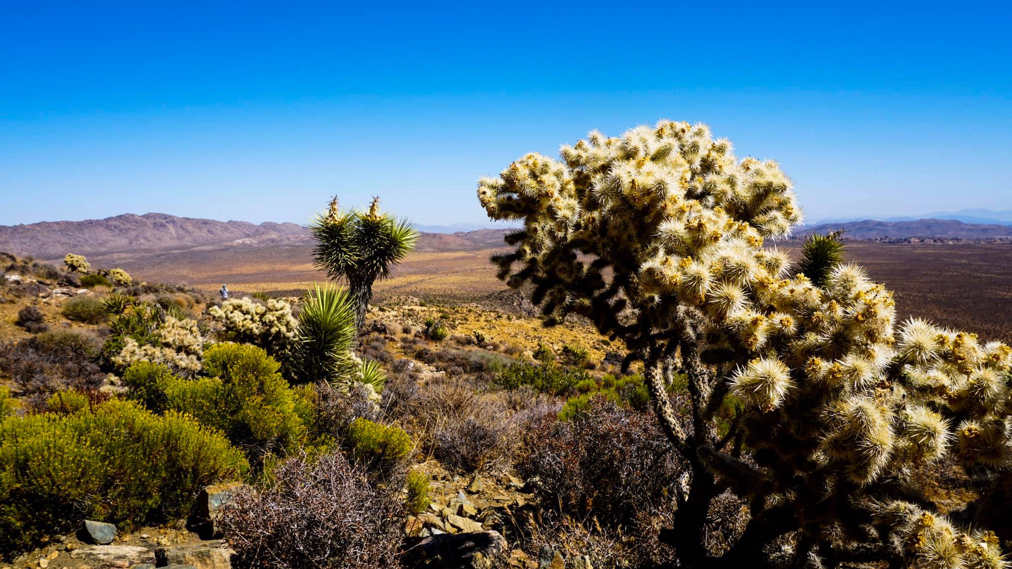 Spojené štáty americké: výhľad z Ryan Mountain Trail v parku Joshua Tree