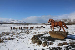 Island: farma skoňmi Laxnes Horse Farm