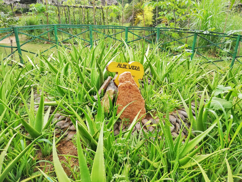 srí lanka: spice garden