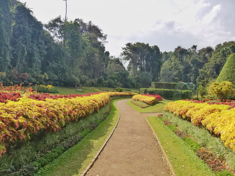 srí lanka: Peradenyia Royal Garden