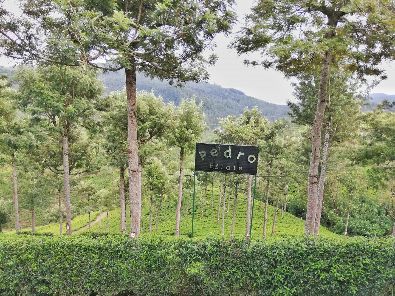 čajové plantáže: Pedro Tea Factory