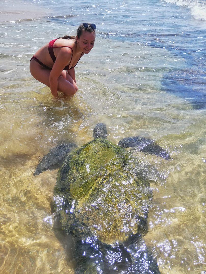 srí lanka: plávanie s korytnačkami